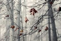 Autumn Grey