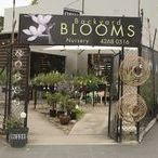 Thirroul Nursery / There are two great Nursery in Thirroul. Backyard Blooms & The Niche Nursery