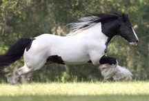 The Gypsy King / The Gypsy King is a Breyer Model as well as a Vogue Model!  He's probably the most famous Gypsy Vanner Stallion in North America!