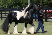 Latcho Drom / This is Gypsy Gold's Latcho Drom, he's an impressive specimen of The Gypsy Vanner Horse Breed.  He is one of the Best producing stallions in the world for the breed.  Enjoy these magnificent pics.