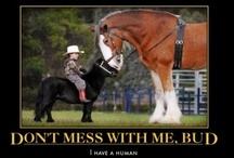 horse Funnies......
