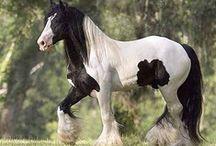 "Breyer Horses / Our very own Breyer model ""The Gyspsy King."""
