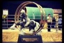 Vannerfair!!! / Vannerfair was established by Jim Wilson of Dearfield Stables in Toronto Canada. This event was designed to celebrate, compete, and to find wonderful support and camaradarie with those who love the Gypsy Vanner horse.
