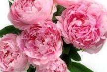 ★Bloemen -Flowers★ / Alles wat met bloemen te maken heeft, en boeketten van Boeketten.nl