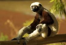 ♥ Madagascar