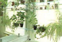 Vihreää- Kasvit sisällä ja ulkona- Green Plants