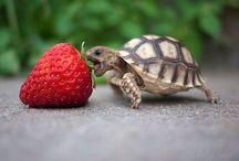 Dieren / Een pinbord om te laten zie hoe lief en mooi dieren kunnen zijn.