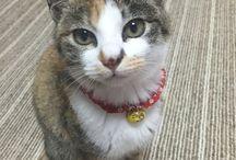 ネコのりんちゃん