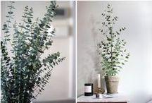 PLANTS / Flowers & Plants