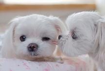 Cute  critters :) / by barbie gonzalez
