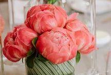 Wedding Theme Coral Pop