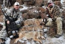 Coyote Hunting / Predator hunting is what we do...Hunting Coyote, Varmint, Coyote Hunting, Calling Coyotes