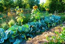 ogród permakultura