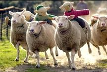 The BIG Sheep Attractions - Shows and Rides