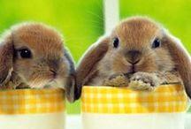 Cutie Pies / <3