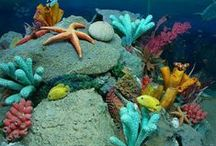 Coral Reefs / by Emma :)