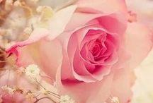 Flowers...Roses / Een zeer geliefde bloem...prachtig als combinatie met gipskruid...mooie kleuren...ik ben er gek op....en niet alleen als bloem maar ook als decoratie.