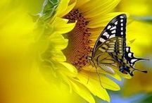 Lovely Pictures...Butterflies / Bijzondere en mooie foto's vlinders...ik ben er helemaal weg van.