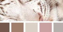 'n Reenboog vol kleure... / Colour palettes