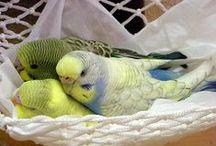 Birds / I Love Birds / by Margaret Contreras