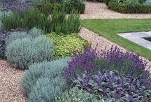 Growing Herbs / Growing and using herbs
