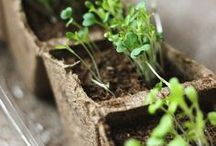 Sprouted / All things sprouting
