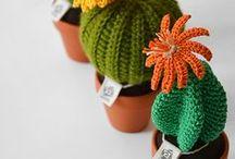 cactus, Kakteen
