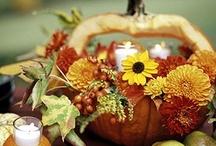 Pumpkin / dýně