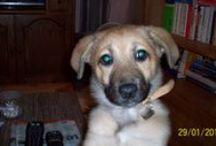 GOLDIE / Meine süsse Hundedame tràgt natürlich auch Magnetschmuckaccessoires in ihrem Halsband.
