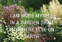 In My Cottage Garden