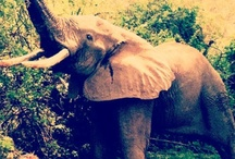 elephants and other animals..