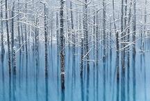 Trees.......