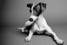 DOGS / by Alice Pouliou
