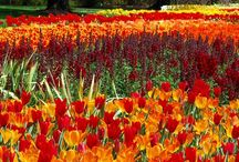 FAMOUS BOTANICAL GARDENS & FIELDS / by Alice Pouliou