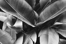 PLANT / by Vincent Lange