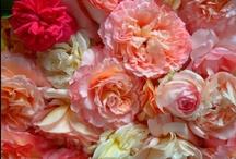Garden / Lovely Ideas & DIY♥