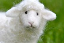 fluffy Sheep / for sheeps only