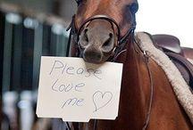 Horsebliss / by Francesca Haas