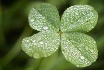 ☆ St Patrick's Day / Inspiring a joyful Gaelic gathering! Make March 17 festive. Remember that TEA is as Irish as booze is!