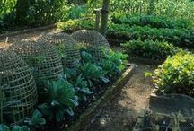 A Garden Potager