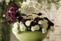 Centerpieces / Flower Arrangements
