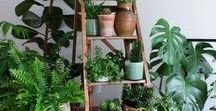 A Garden Indoors /