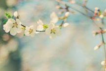 Season of Spring / ❖ Spring Joys