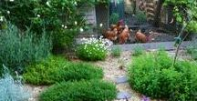 A Garden for Hens / I ♡ Chickens! A tidy little coop in my backyard for a few egg layers who enjoy time in the organic garden every day. I love to share! Pin freely.