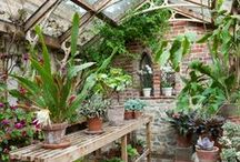Gardens, Sunrooms, Winter Gardens, Greenhouses...