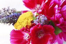 Naturalle et Fleurs / Nature's beauty