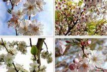 Fleurs & Plantes - Flowers and plants