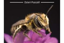 Dzień Pszczół