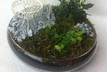 Zelfgemaakte plantenbakjes / Zelfgemaakte plantenbakjes