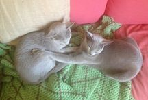 Russian Blue / My beautiful sweet funny cats